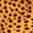 LeopardM